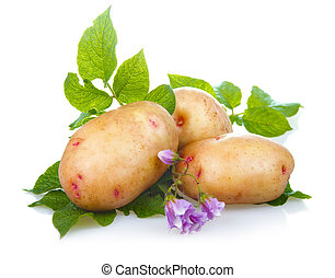 Heap of ripe potatoes vegetable with green leaves isolated...