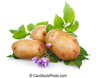 花, 土豆, 蔬菜, 被隔离, 綠色, 離開