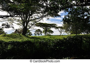 Kenya Country Side - a Kenya country side Pasture and trees