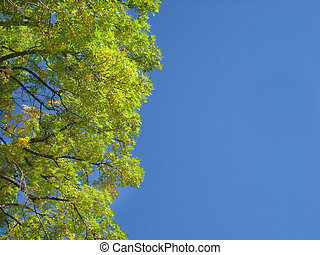 Blue Sky Tree Leaves