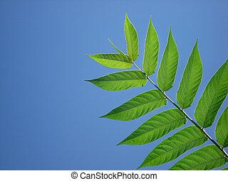 Blue Sky Leaf