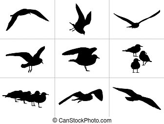 9 realistic silhouettes of seagulls: flying and standing,...