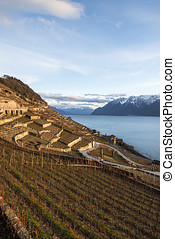 Lavaux, Vineyard Terraces, Switzerland - The Lavaux Vineyard...