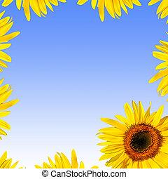 Summer Sunflower Beauty