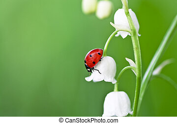 ladybird - The ladybird creeps on a flower of a lily of the...
