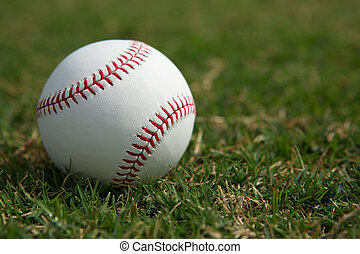 Baseball in the Outfield Grass - New baseball in the...