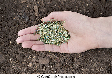 Planting New Grass Seed - Horizontal position of Female hand...