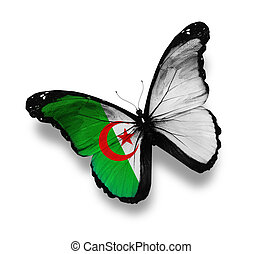 Algerian flag butterfly, isolated on white