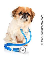 Dog and stethoscope.