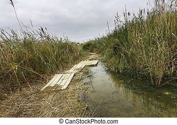 narrow path surrounded by marshland reeds