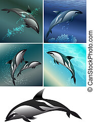 dolphin set - Set of dolphins including five images -...