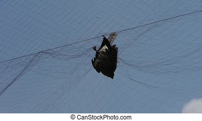 Bird trapped in net,struggling to die in blue sky like fail...