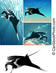 manta ray set - Set of manta ray including four images -...