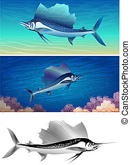 sailfish set - Set of sailfishes including three images -...