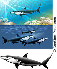 shark set - Set of sharks including three images - isolated...