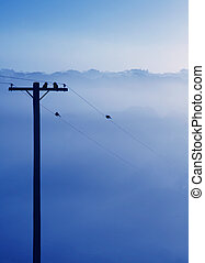 Foggy Winter Morning in Blue - Frosty Morning in the...