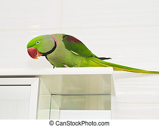 A large green parrot