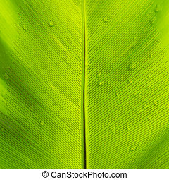 Beautiful green leaf with water drops