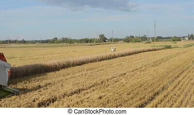 harvest field stork