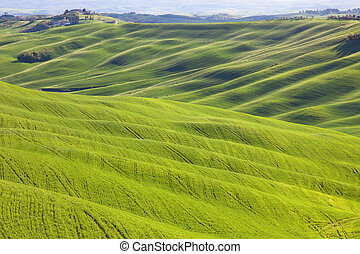 Tuscany, undulating terrain in Crete Senesi country landscape, Italy, Europe. Rolling Hills, green fields with sunlight on sunset and a farm with cypresses trees.
