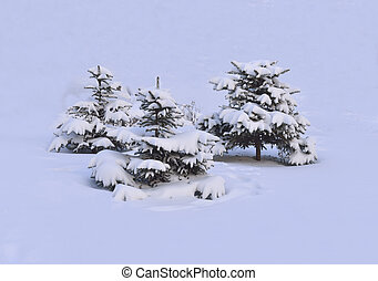 Winter shrub - Bush under snow