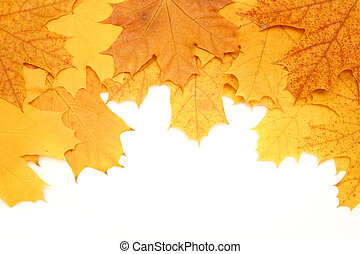 Leaves of a maple - Decorative frame from bright autumn...