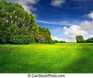 Green spring field and blue sky