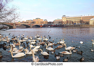 Birds at riverside of Vltava against old Prague, Czech...