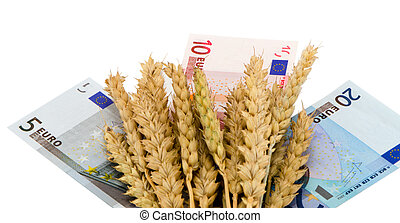 wheat ripe harvest ears euro cash banknote white