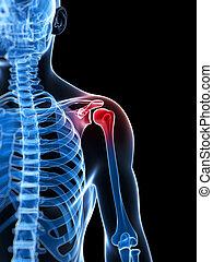 Highlighted shoulder