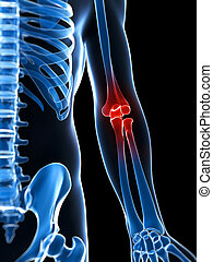 Highlighted skeletal elbow - 3d rendered illustration of a...