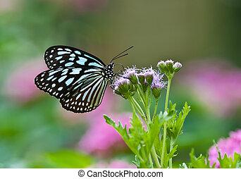Oscuridad, azul, tigre, mariposa