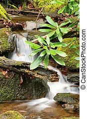 Flowing Waterfall - Waterfall in Tremont at Smoky Mountains