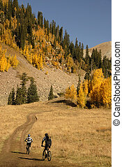 Mountain biking with Aspen trees - Two mountain bikers head...