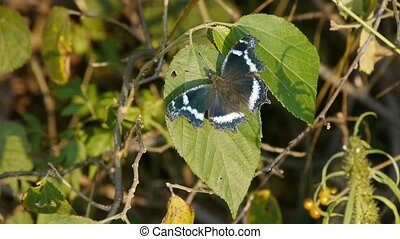 butterfly to incite wings on green leaves