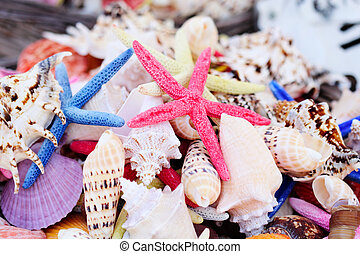 Sea shells - Multicoloured sea shells and starfishes in a...