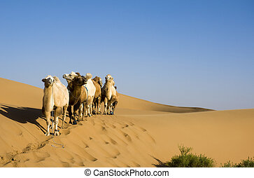 Sand desert ,china