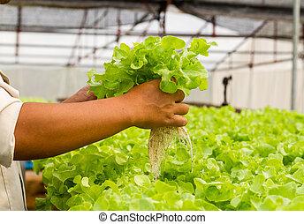 organique, hydroponic, légume, ferme