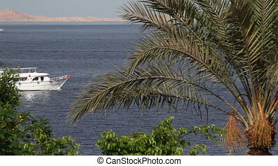 Sailing yachts in the Red sea