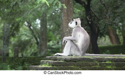 Monkey activity