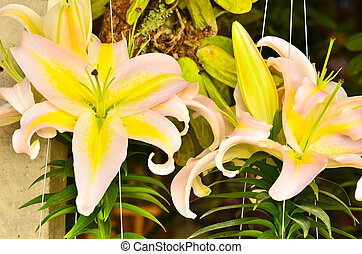 Lily fragrance.