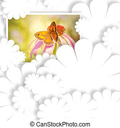 blank card and butterfly photo