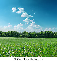 green grass with tree and cloudy sky