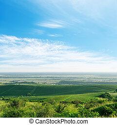 light clouds over green vineyard