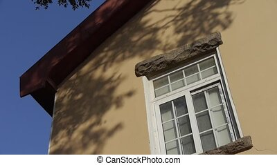 Mottled shadows of trees on window wall.Tree with old...