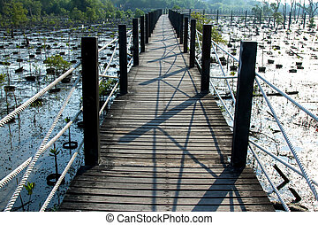 Wooden Walkway in Mangrove forest.