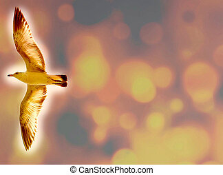 Bird in flight - presentation background -