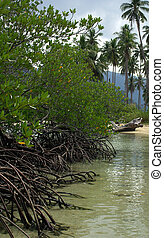 The roots of the mangrove trees on the island of Koh Chang,...