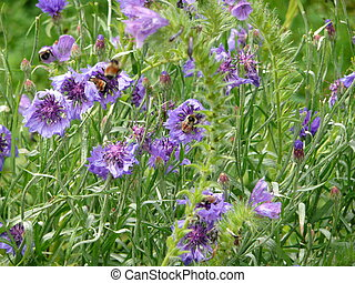 abejas, trabajo