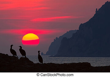 Cormorants looking sunset on the stone